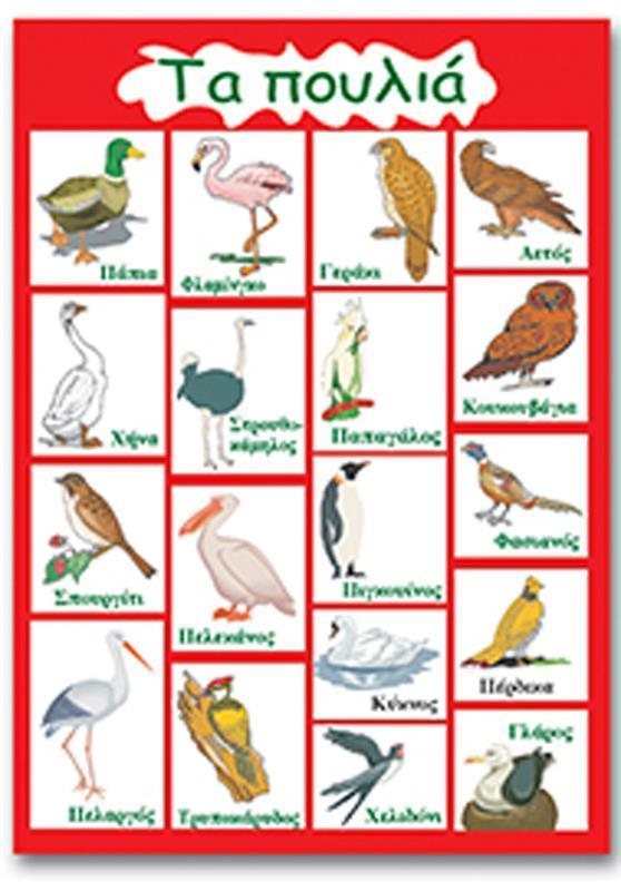 """Next εκπαιδευτική αφίσα """"Τα πουλιά"""" 50x70εκ."""